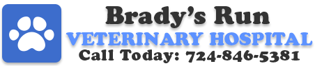 Brady's Run Veterinary Hospital